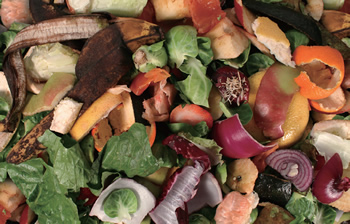 食品廃棄物と食糧問題